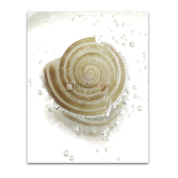 Spirale 04