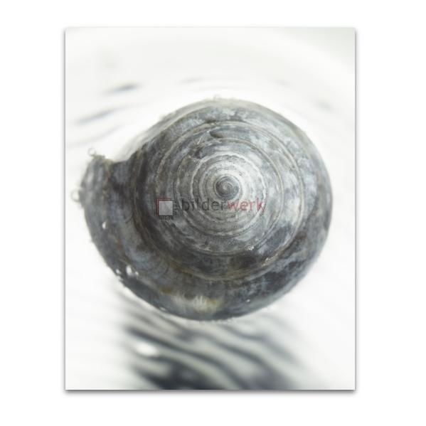 Spirale 05