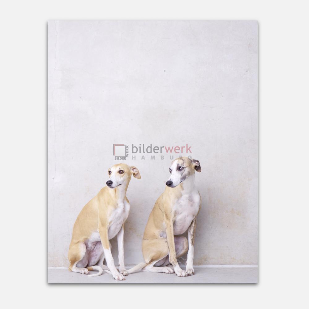 Hunde 06 1