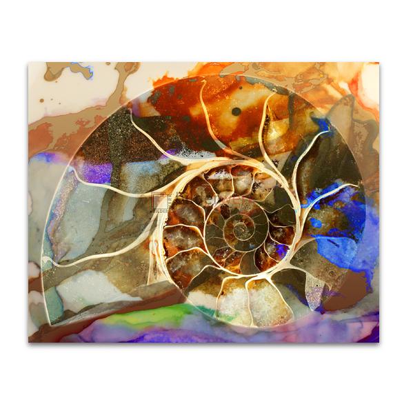 Ammonit 02