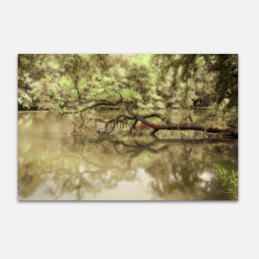 Wasserbaum 1