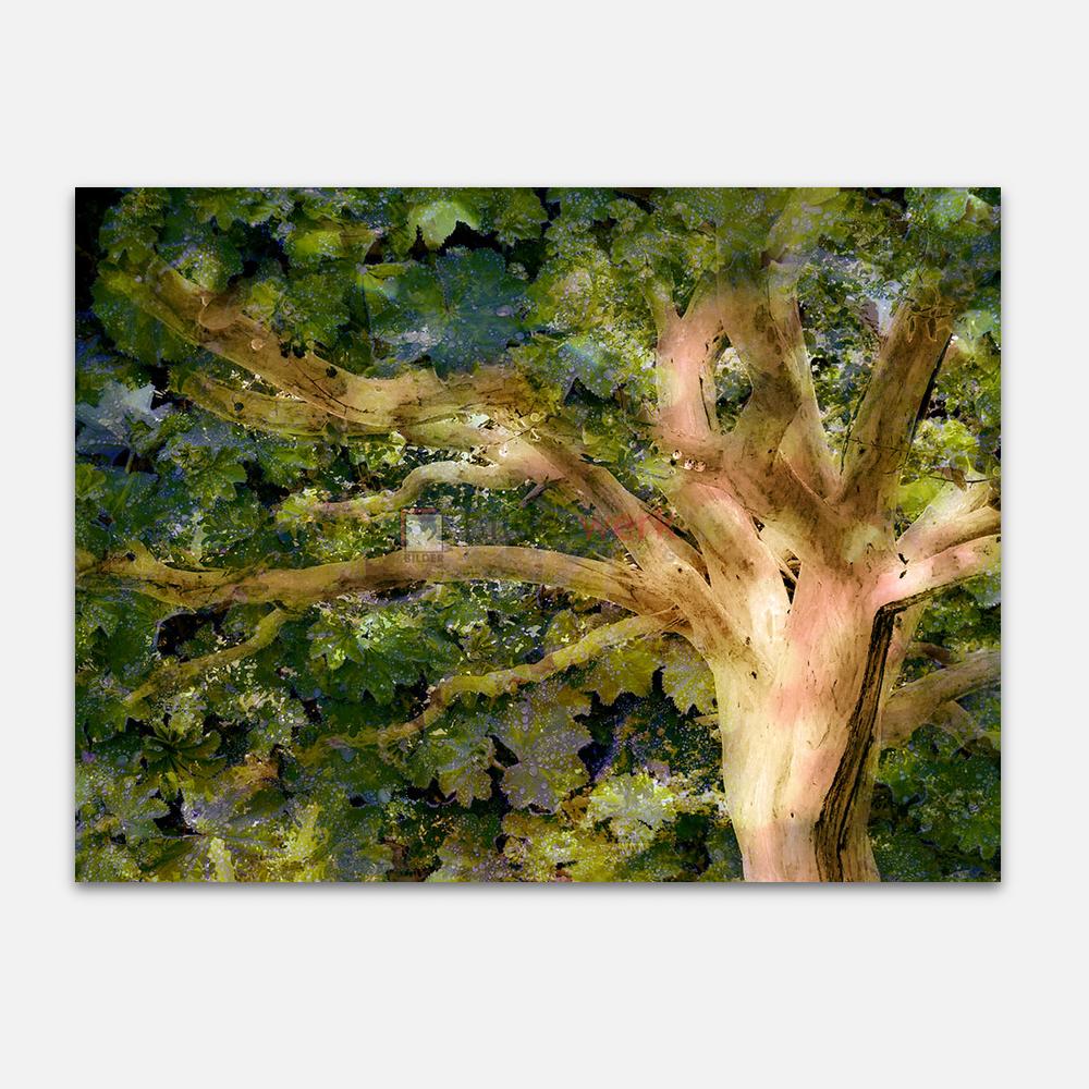 Weißbaum 1