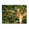 Weißbaum