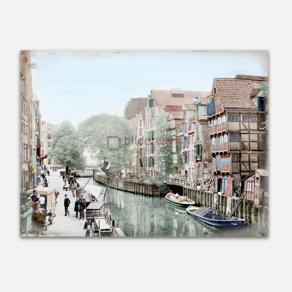 Holländischer Brook 1