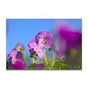 Botanisch 06