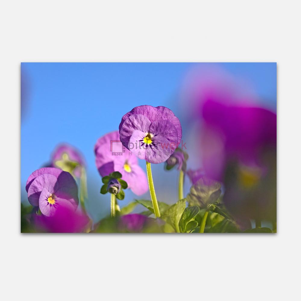 Botanisch 06 1