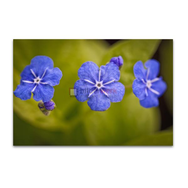 Botanisch 09