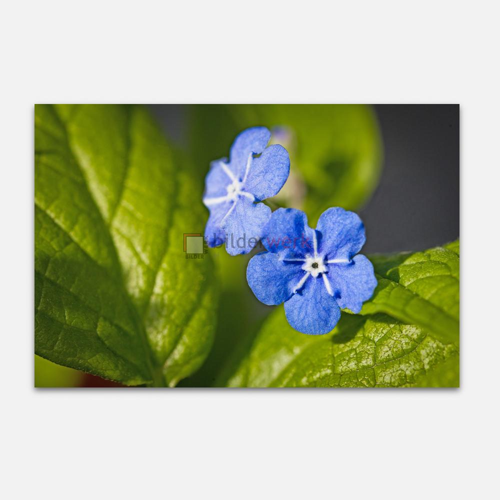 Botanisch 10 1