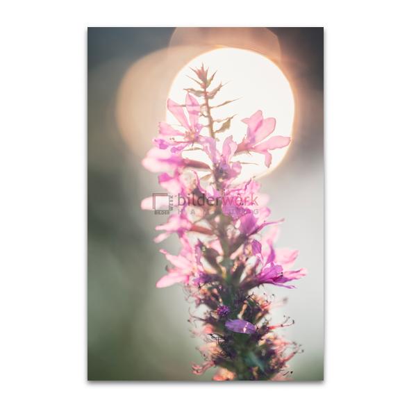 Botanisch 41