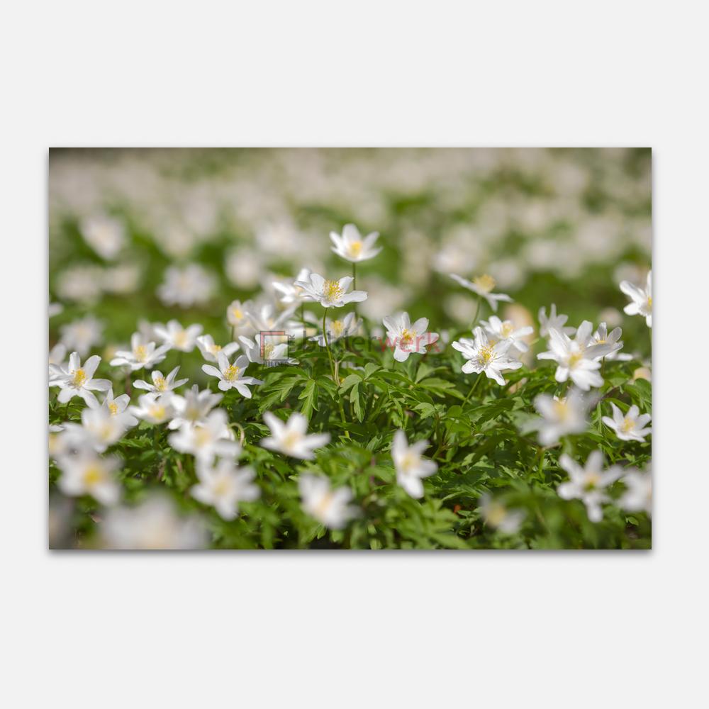 Botanisch 12 1