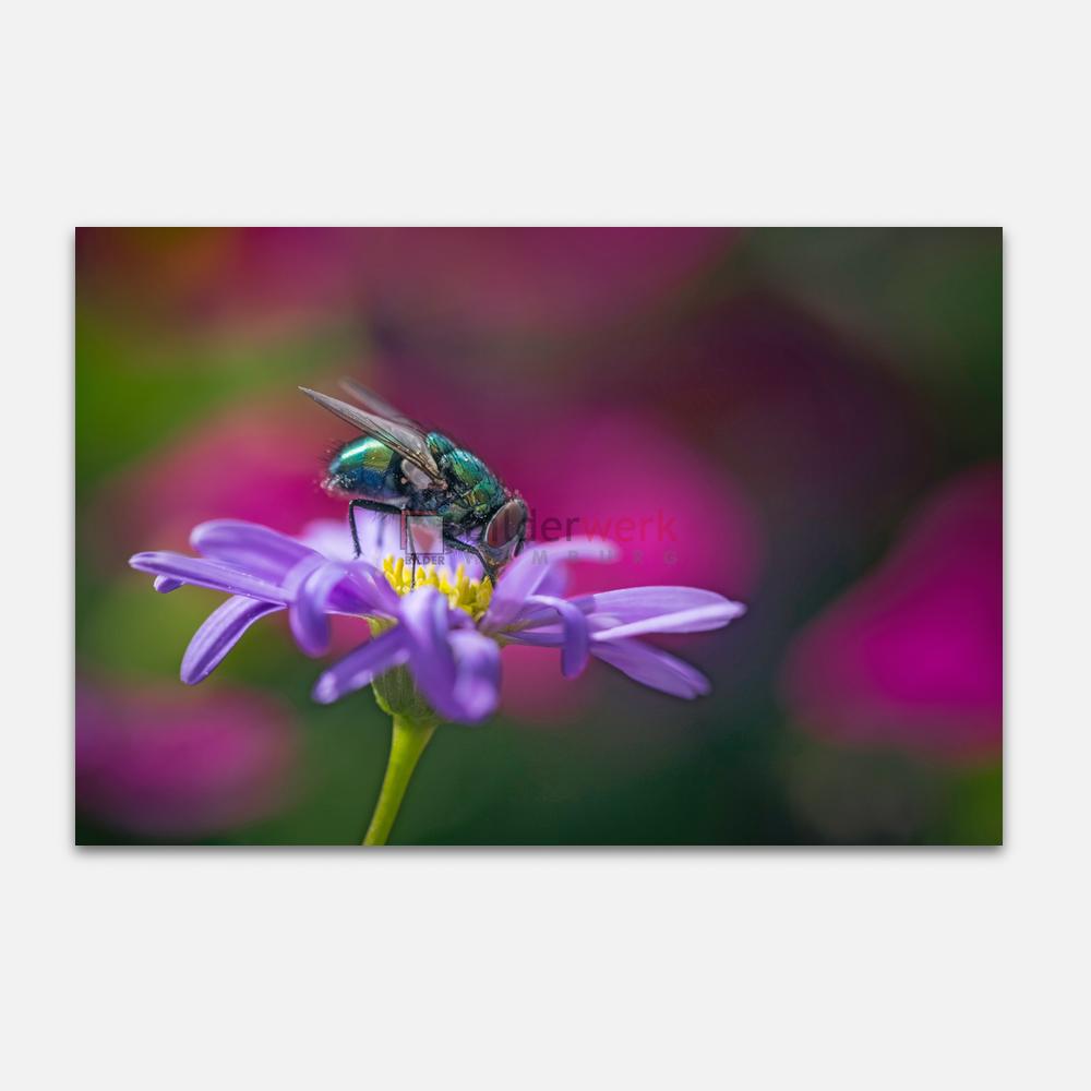 Botanisch 43 1