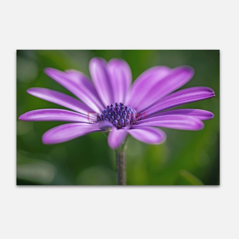 Botanisch 44 1