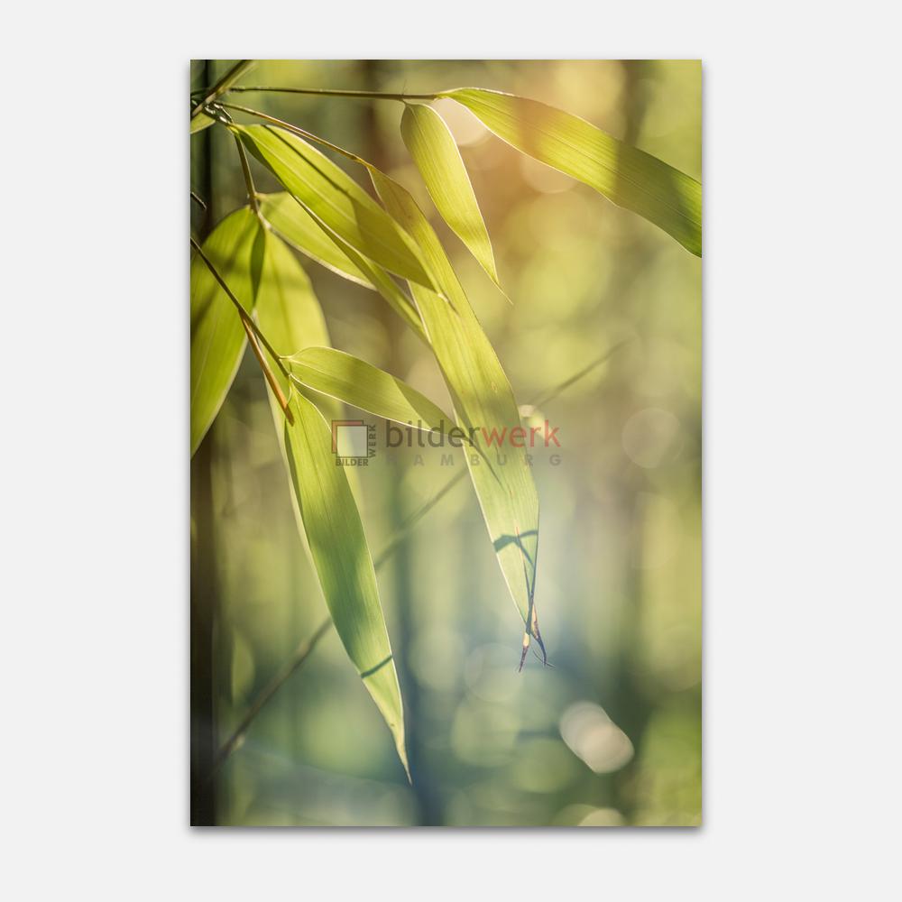 Botanisch 54 1