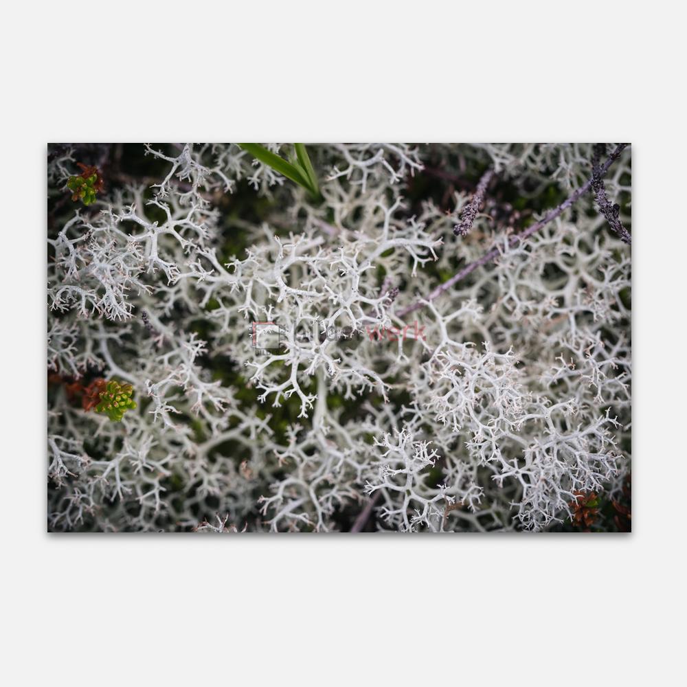 Botanisch 91 1
