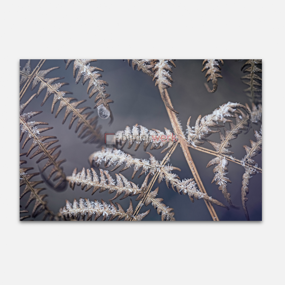 Botanisch 92 1