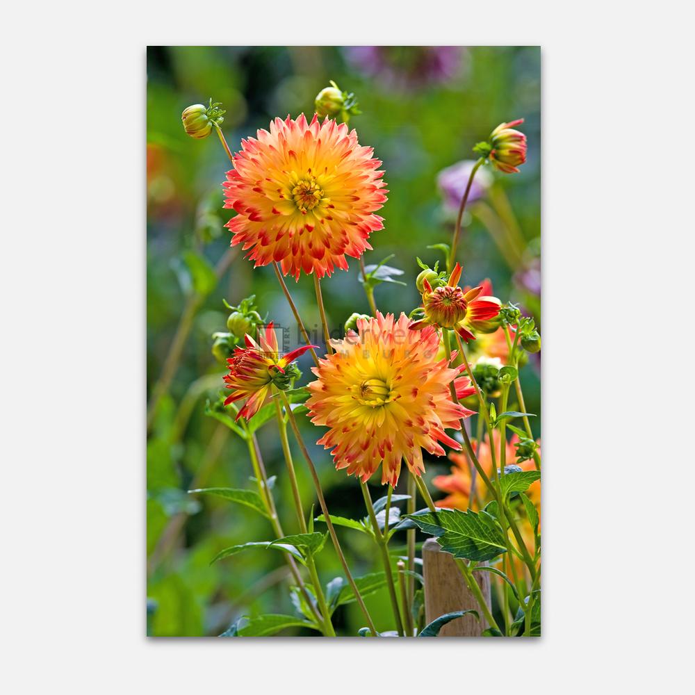 Botanisch 52 1