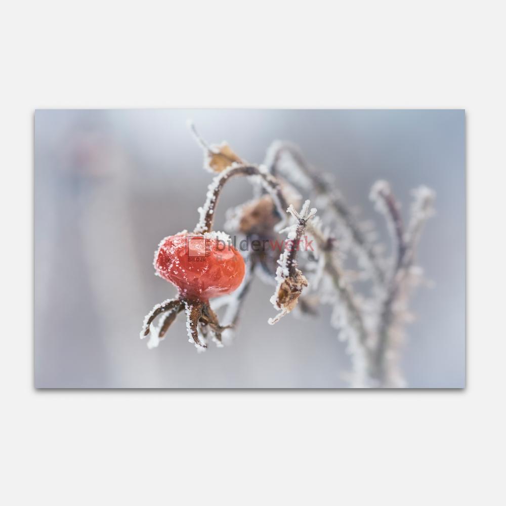 Botanisch 93 1