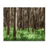 Wald 04