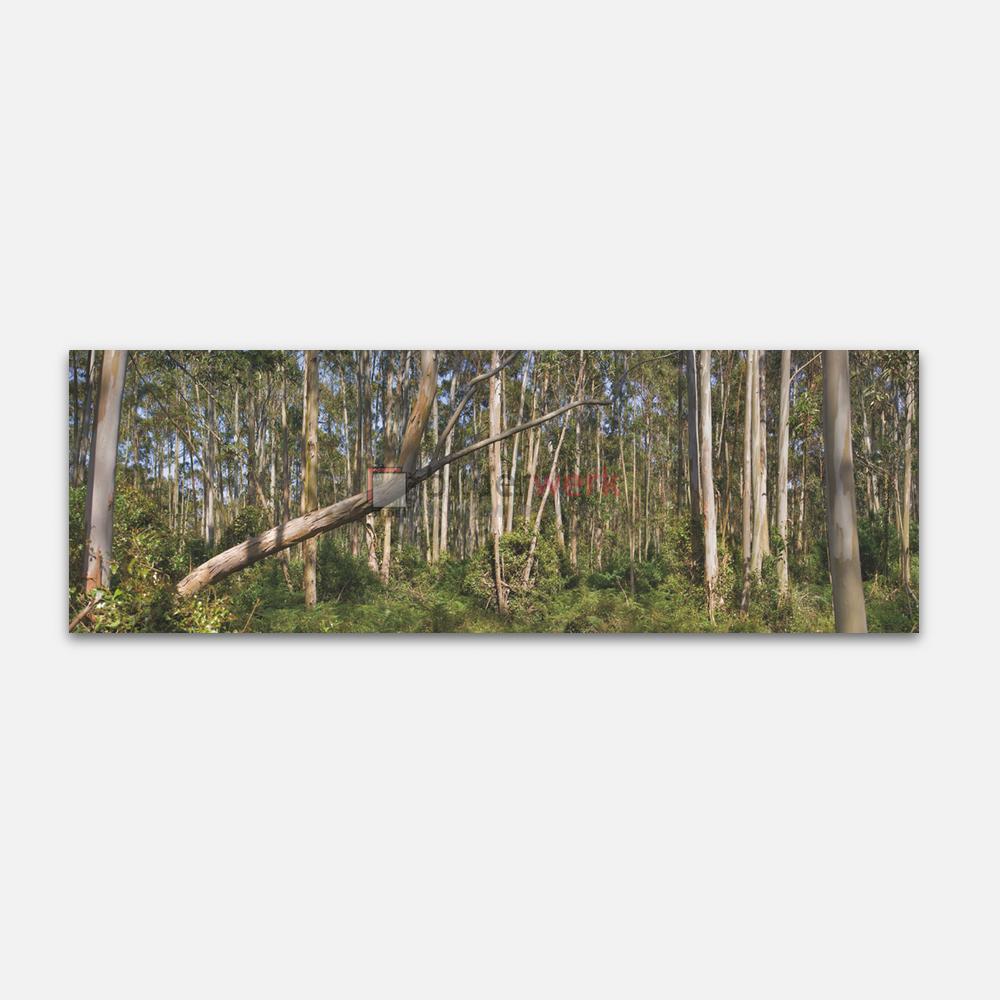 Nature 50 1