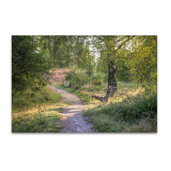 Naturschutzgebiet Wittmoor 01