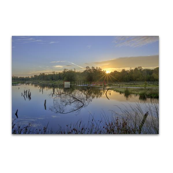 Naturschutzgebiet Wittmoor 04