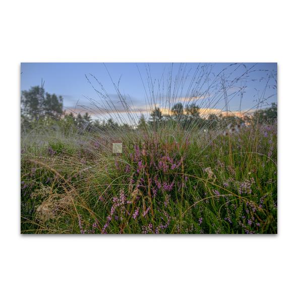 Naturschutzgebiet Wittmoor 05