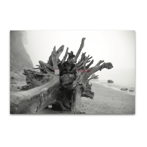 Holzstumpf