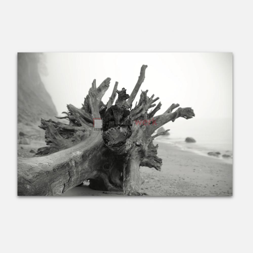 Holzstumpf 1