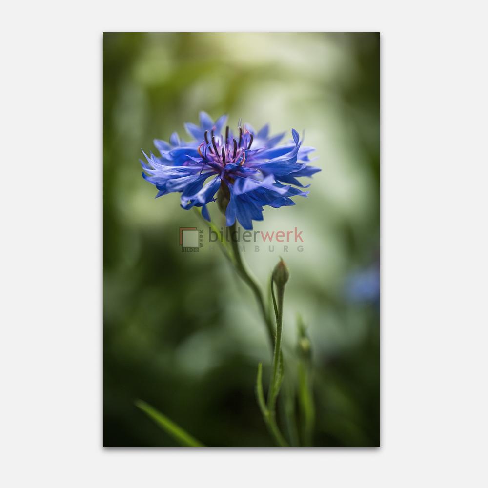 Botanisch 58 1