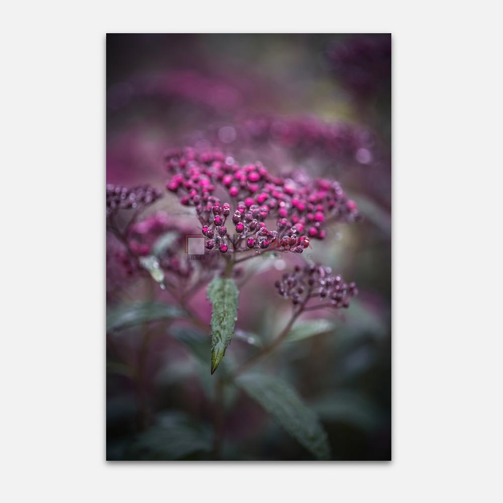 Botanisch 59 1