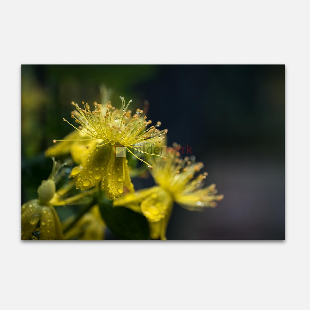Botanisch 60 1