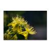 Botanisch 60