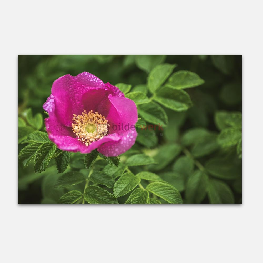 Botanisch 61 1