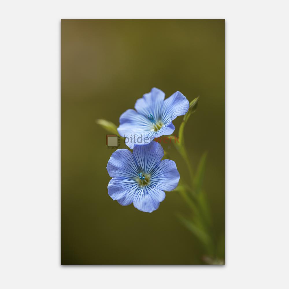 Botanisch 69 1