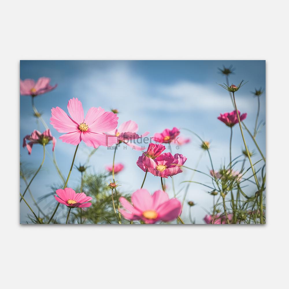Botanisch 70 1