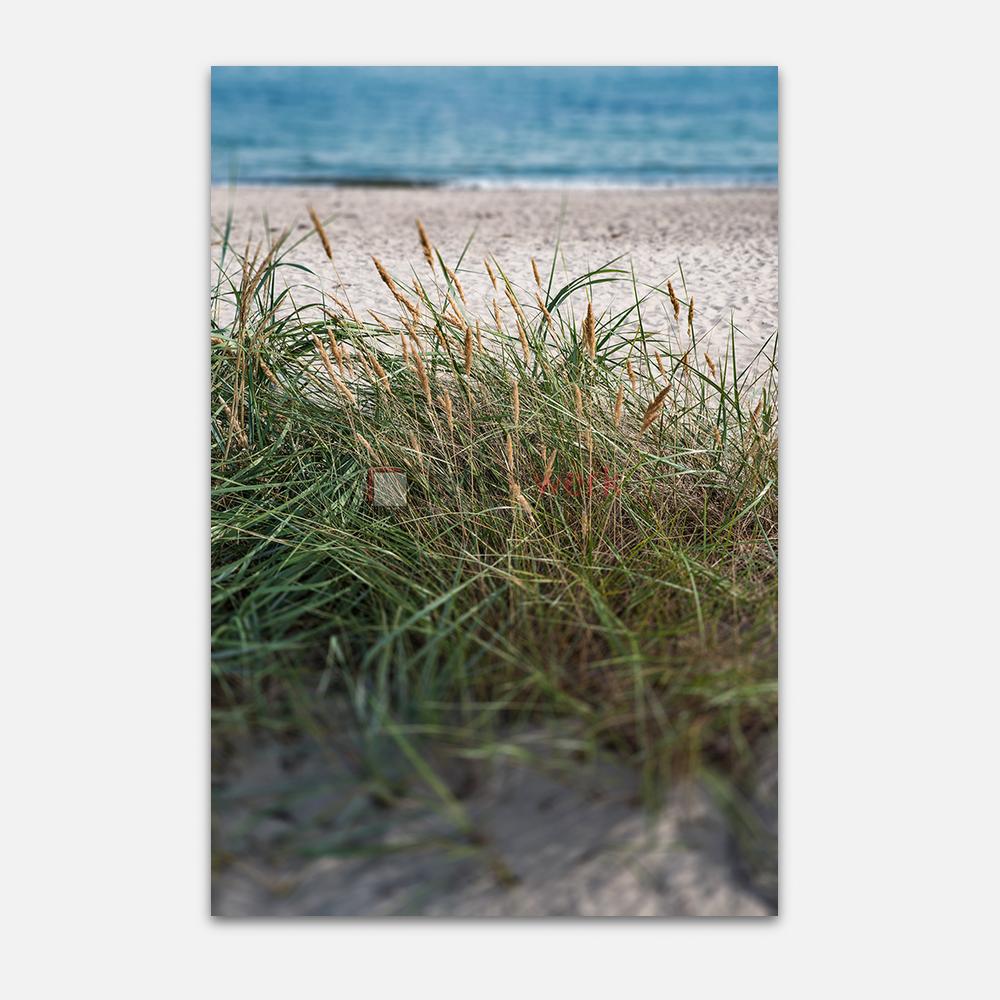 Strandhafer 1