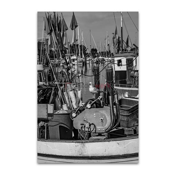 Hafenmöwe