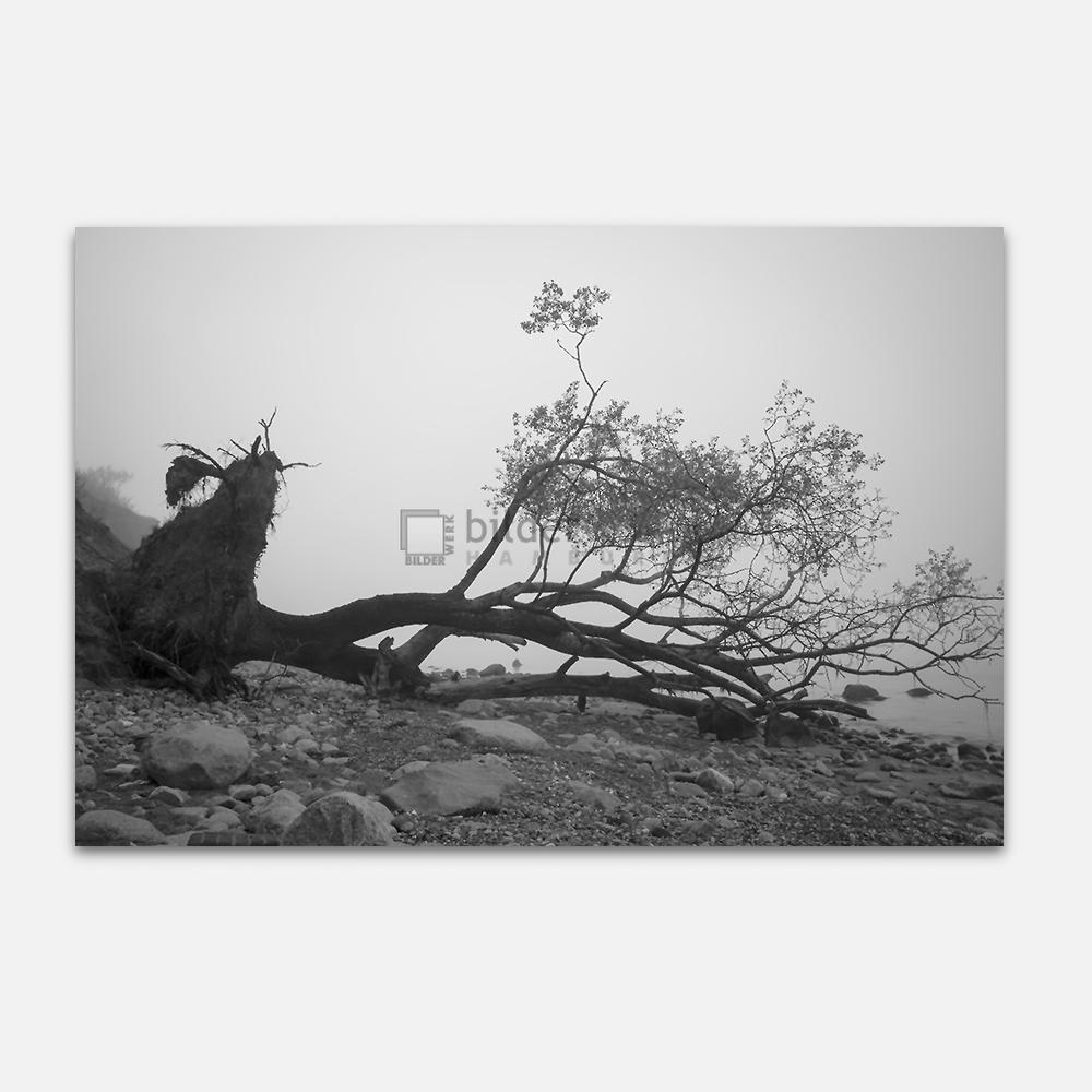 Gefallener Baum 1