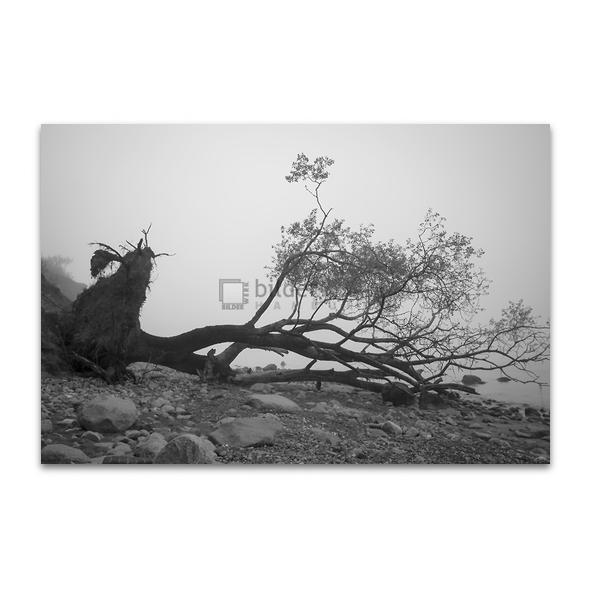 Gefallener Baum